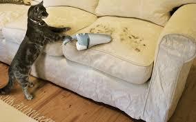 кот пылесосит